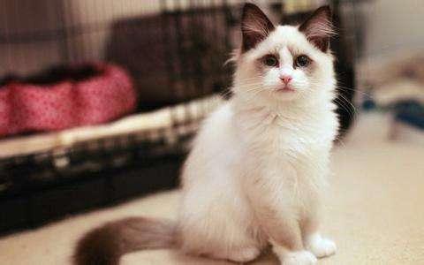 小猫咪-喵~