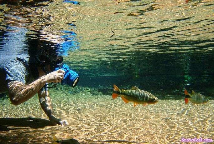 水下鱼儿意境美图