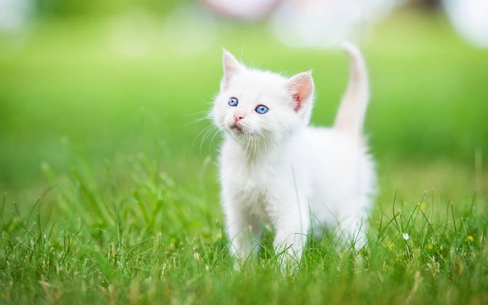 高清猫咪,宠物猫咪猫