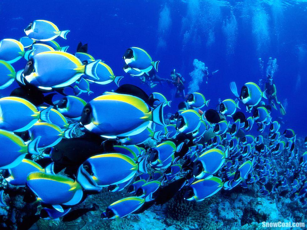 高清摄影美丽的热带鱼群[4]2015-05-12 14:21:37图片