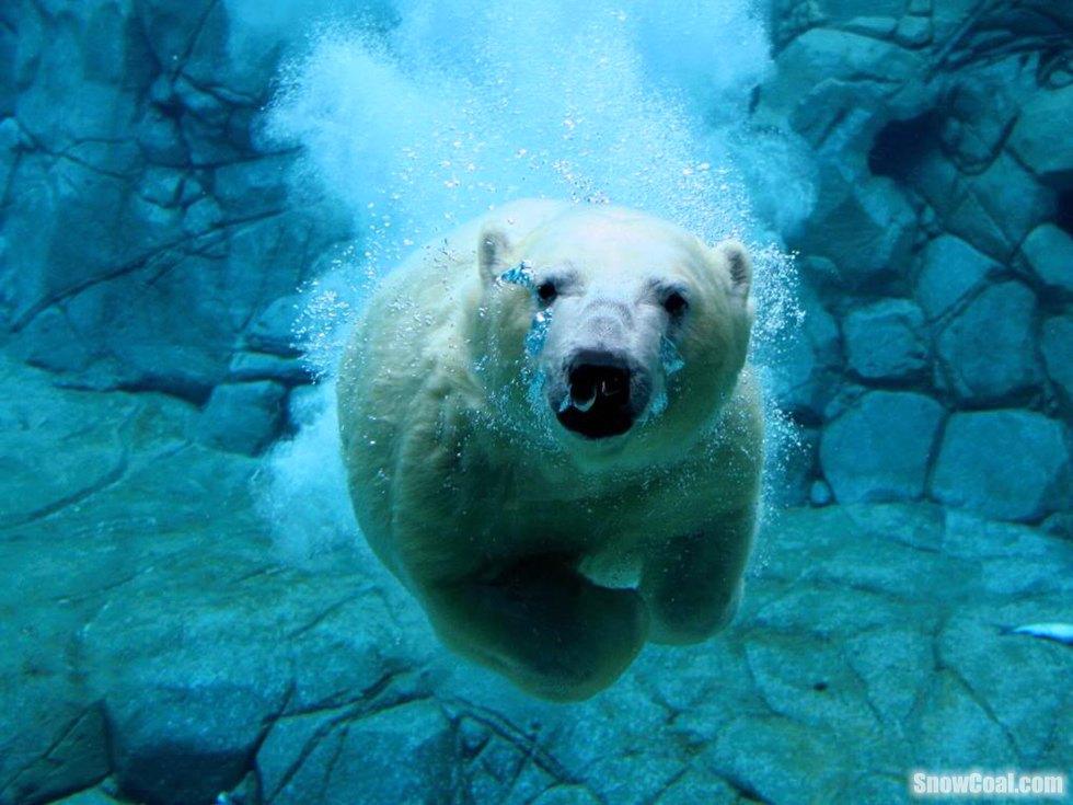 动物潜水绝美图片