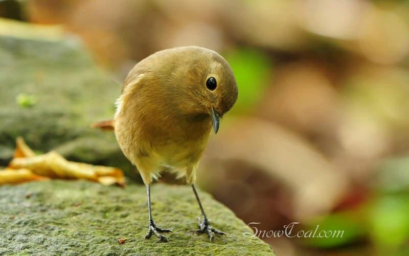 漂亮的鸟儿 早起的鸟儿有虫吃,动物鸟儿漂亮的鸟儿