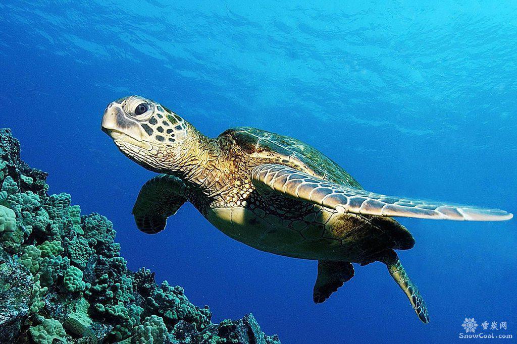 海龟美图欣赏