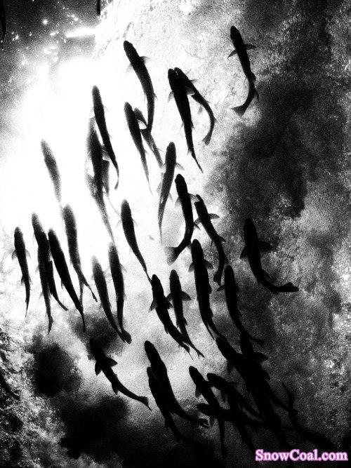 水墨鱼 鱼 水墨画