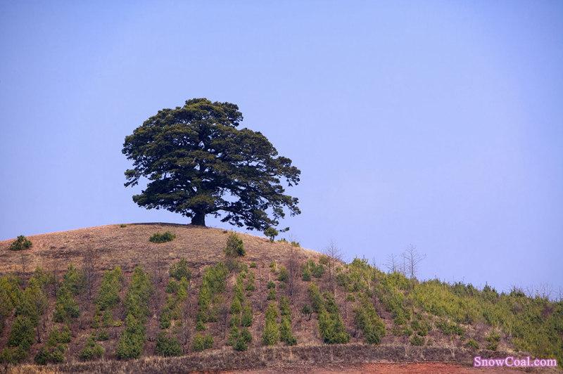 美丽的梯田我的家-云南梯田美景,云南梯田自然环境地理