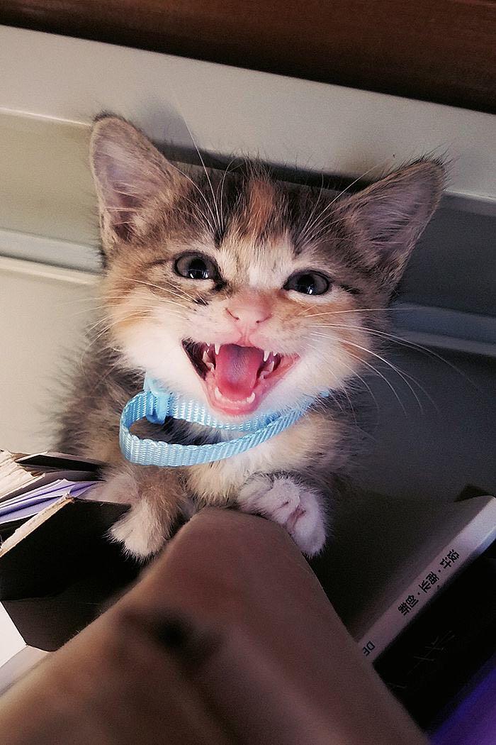 宠物 猫 喵喵