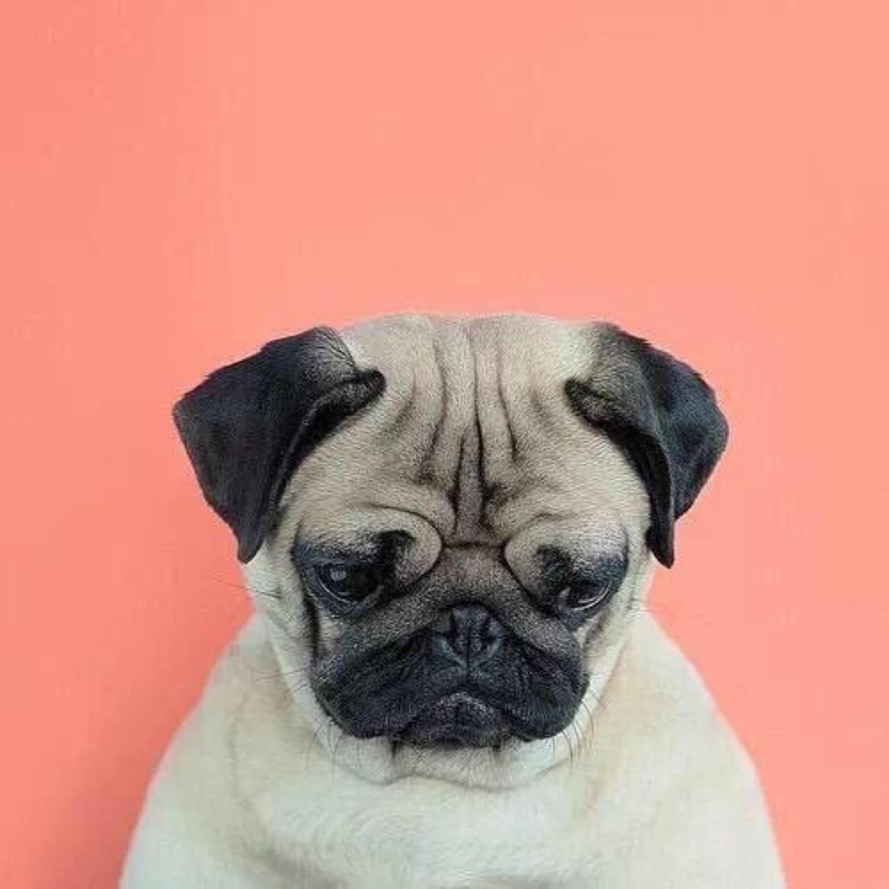 狗狗也照二寸照