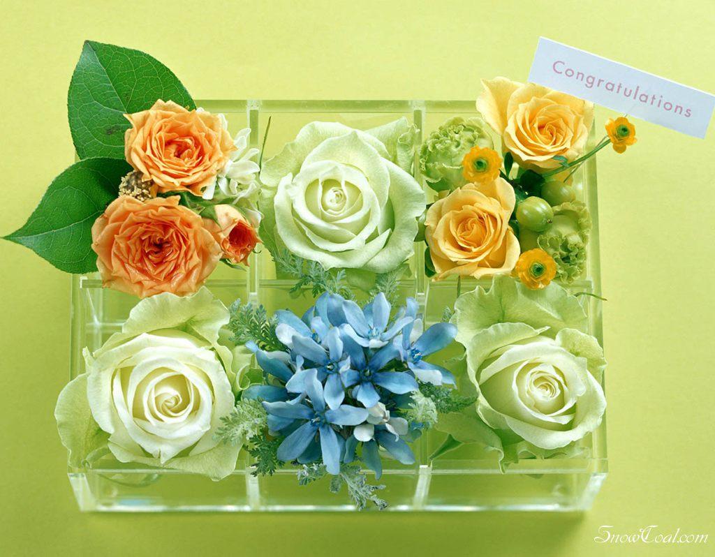 各种颜色的玫瑰花[2],玫瑰花