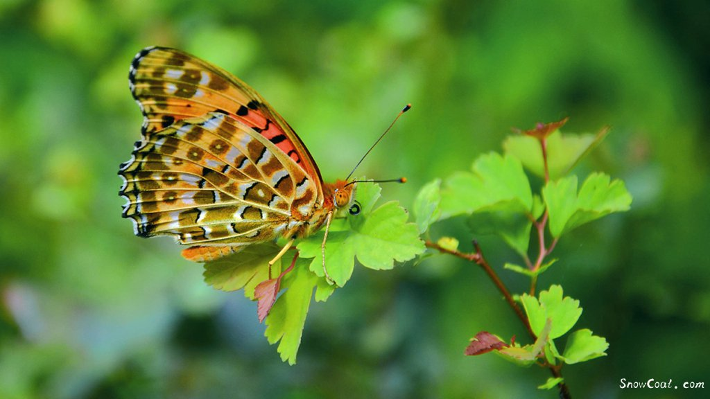 高清图片 优雅的蝴蝶