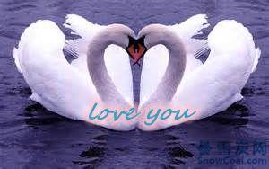 """用英语自然表达""""爱你"""""""