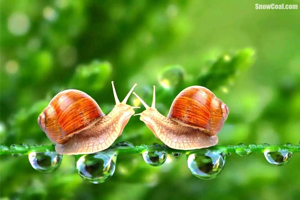 世界这么大,我想带你去看看,蜗牛