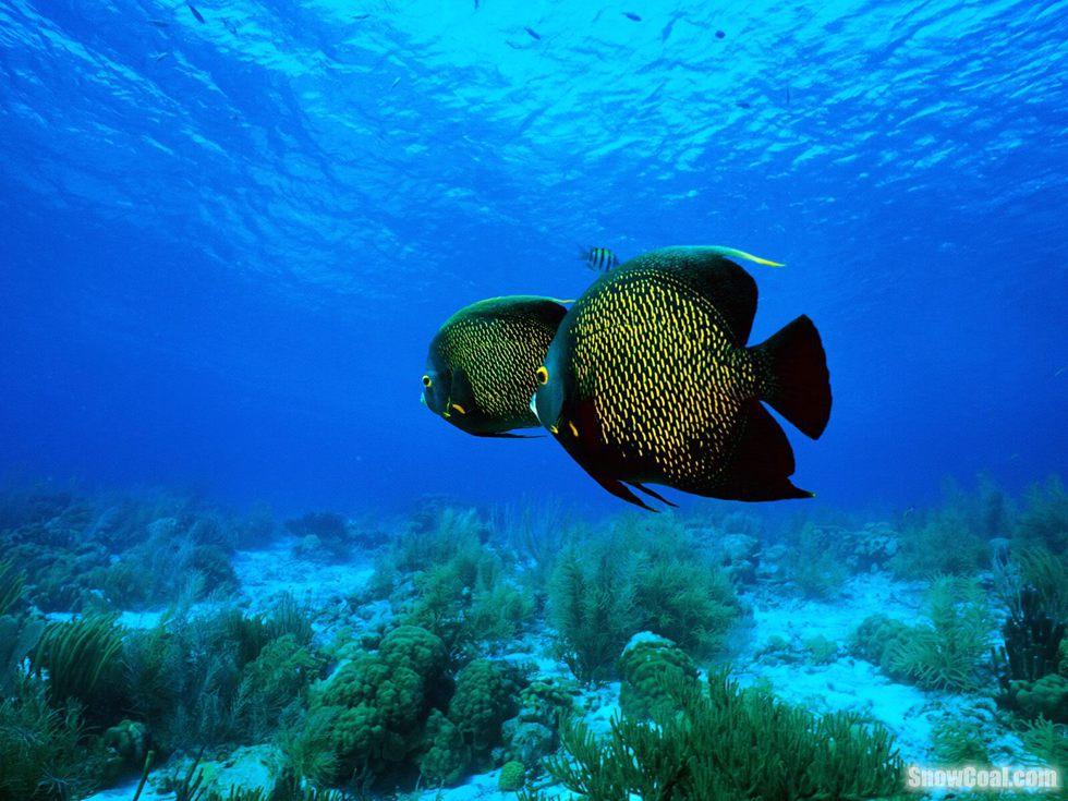 热带珊瑚礁漂亮鱼儿欣赏