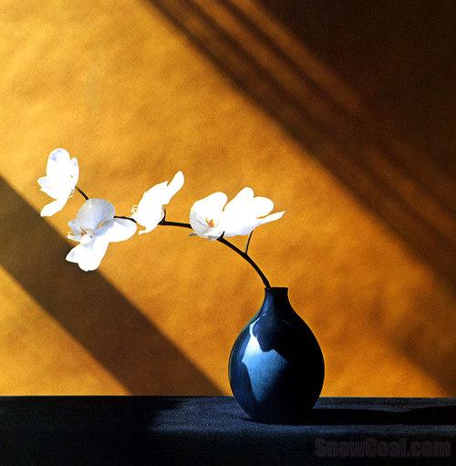 艺术 花瓶