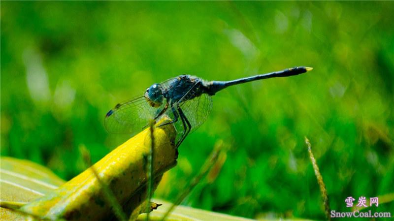 蜻蜓高清美感摄影,动物蜻蜓摄影