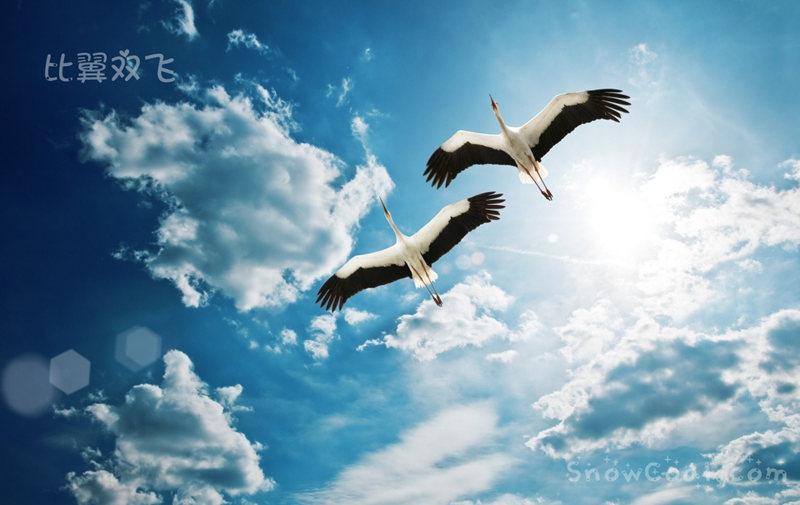 比翼双飞,摄影动物鸟儿