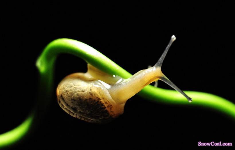 动物 蜗牛 摄影