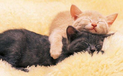 各种动物睡觉大萌集,动物睡觉