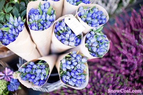 这些美的让人窒息的花朵 你都认识吗?