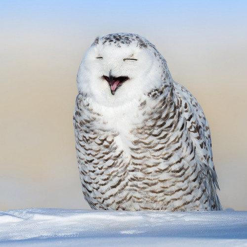 动物-雪雕