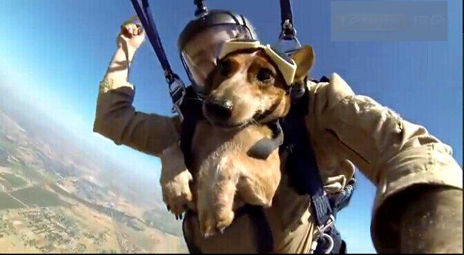 军事 特种兵 爱犬 跳伞