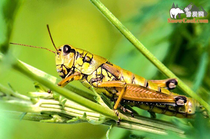 昆虫图片摄影