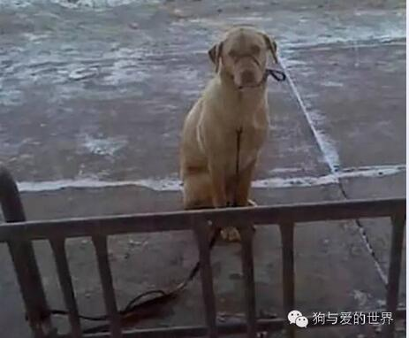 流浪汉为狗狗取暖,看后让人泪奔!