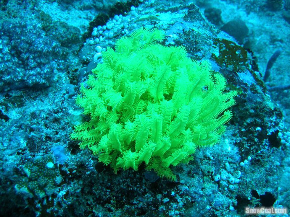 海底世界之珊瑚礁附近生物美景2015-05-12 14:30:24