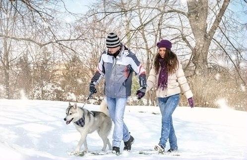冬季保健八要素 中英双语