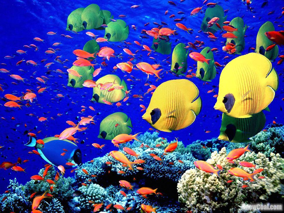 高清摄影美丽的热带鱼群