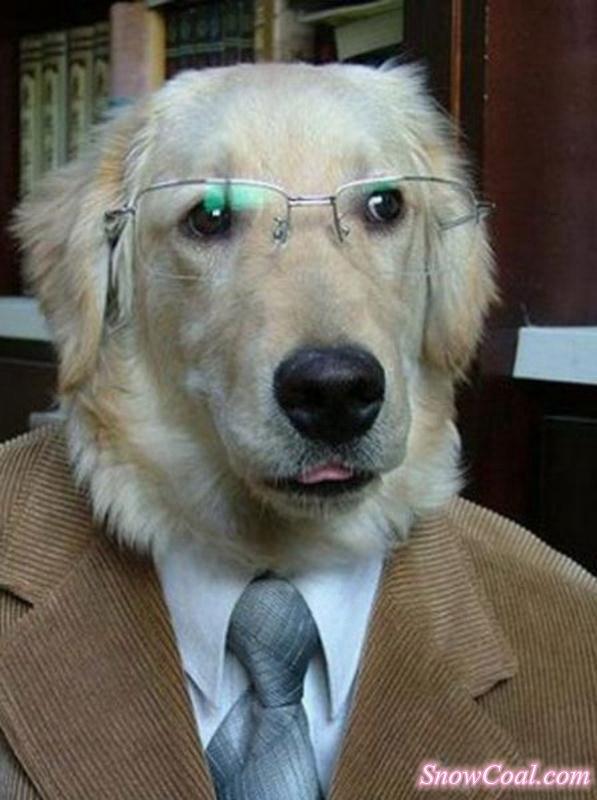 超级搞笑的狗狗,笑死人不偿命[2],宠物狗狗搞笑