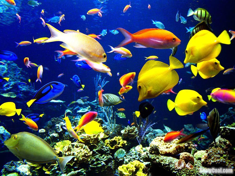 高清摄影美丽的热带鱼群[6]2015-05-12 14:21:37图片