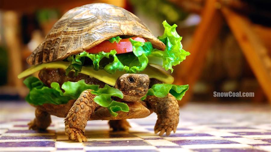 这样的汉堡你敢吃吗?