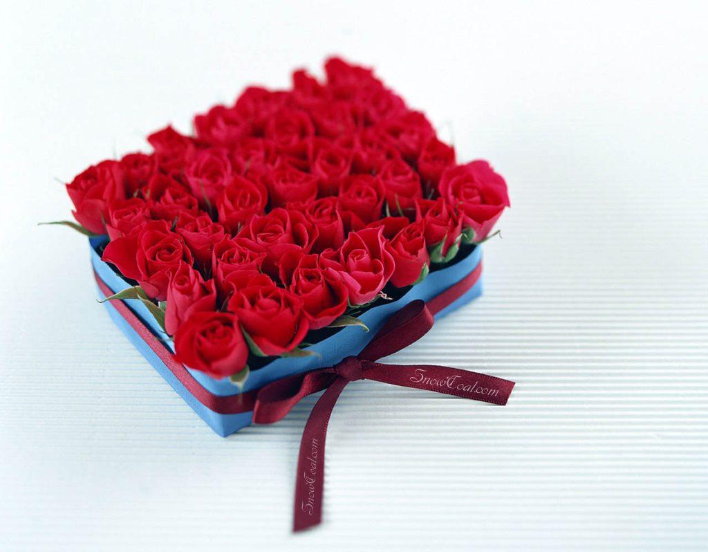各种颜色的玫瑰花