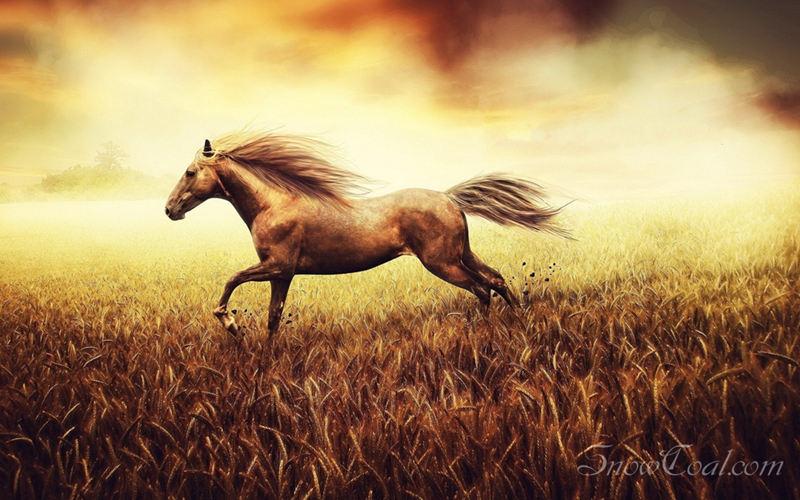 奔路的骏马