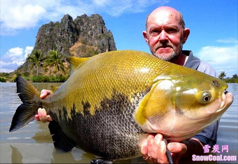 盘点世界上钓到的最大的鱼