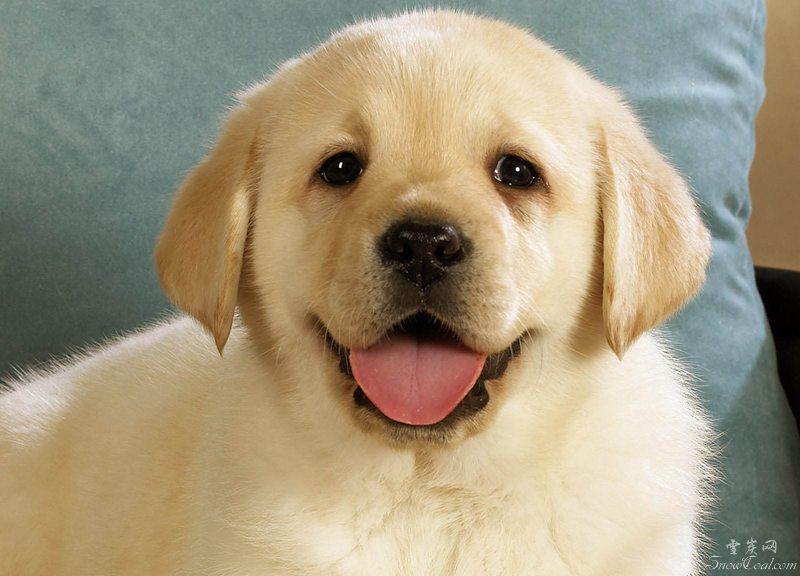 可爱的萌狗狗图集