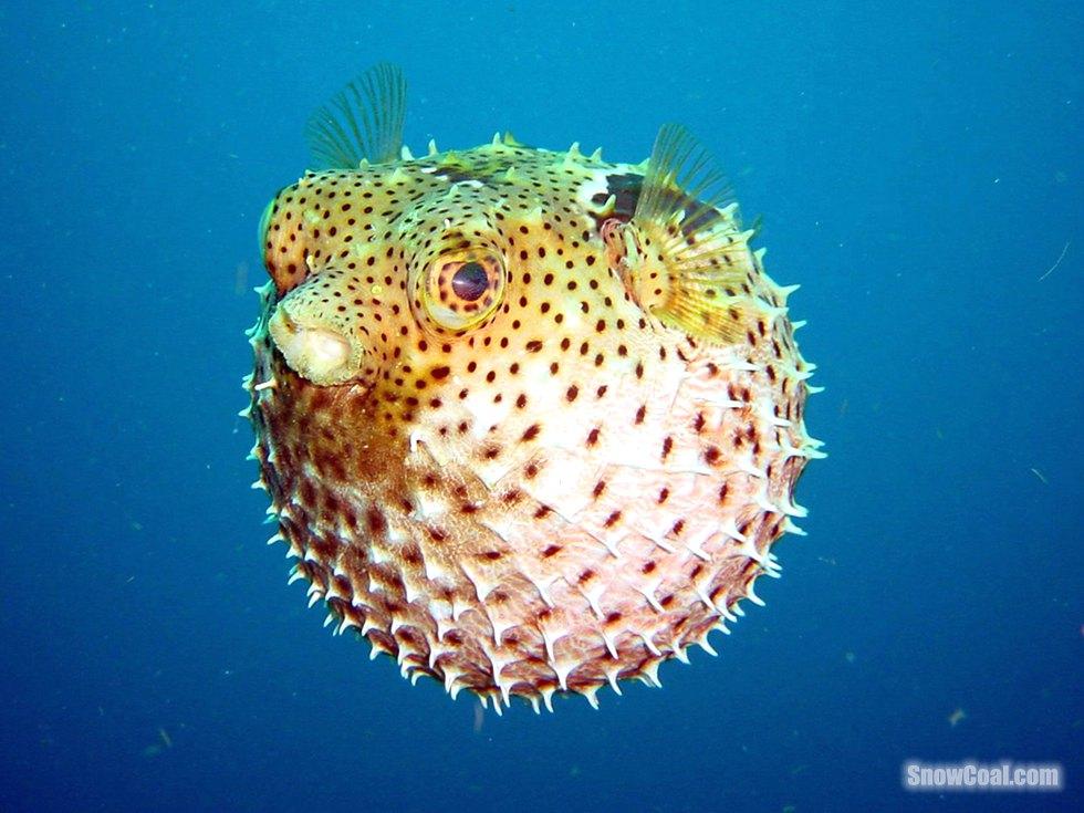 奇幻海底世界 高清摄影美图