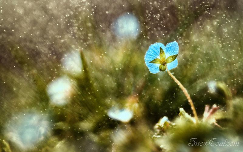雨中的花朵,植物摄影雨中花朵