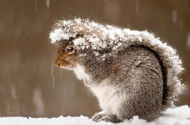 天气好冷啊 尾巴用上了