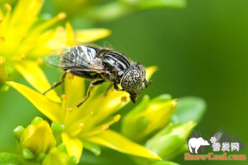 摄影 昆虫