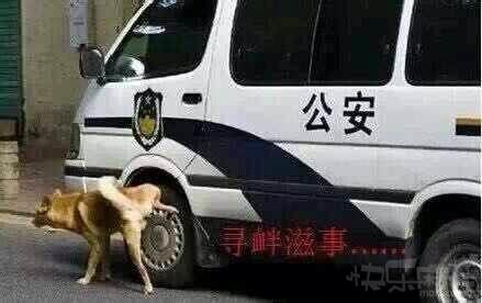 狗狗-笑话-寻衅滋事