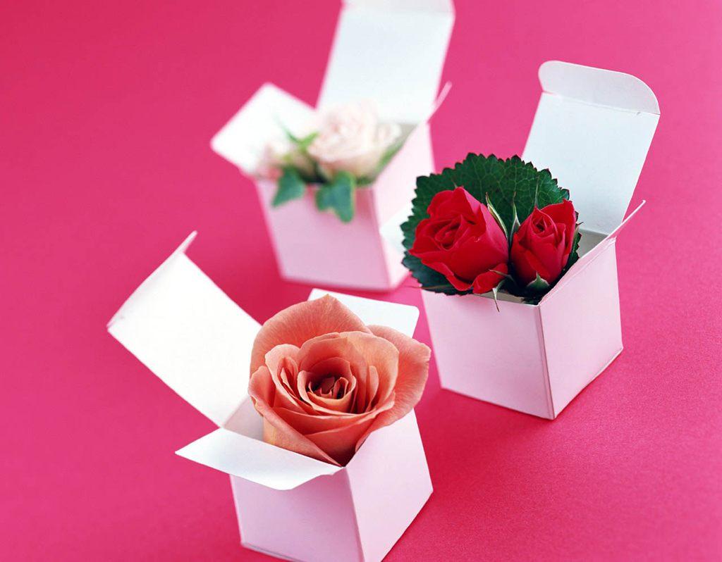各种颜色的玫瑰花[3],玫瑰花