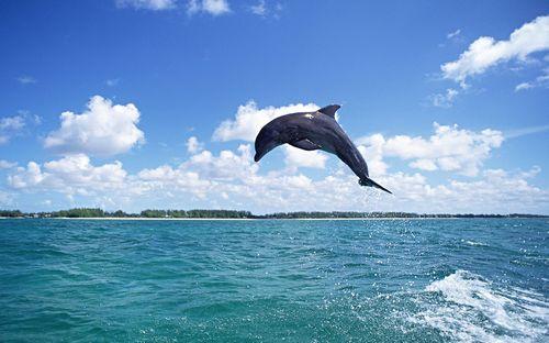 海豚,动物海豚