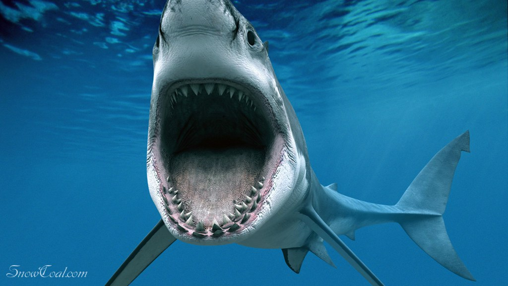 动物 鲨鱼 动物保护