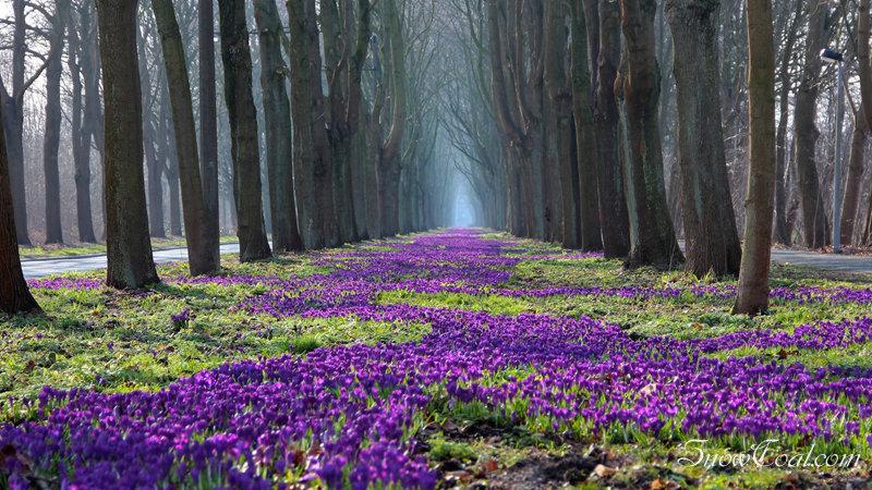 花之海洋,风景植物摄影花之海洋