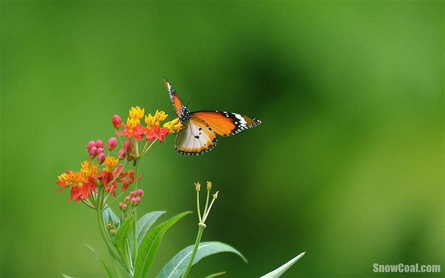 春天里的蝴蝶